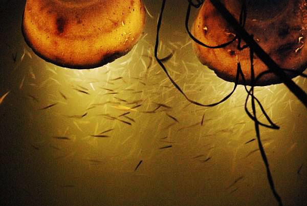 fishing at night to beat the heat - kentuckyangling news magazine, Reel Combo