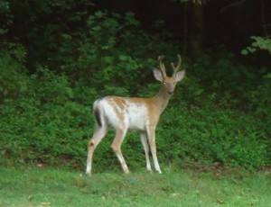 Deer Season: The Wait is Over