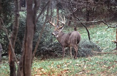 National magazine names Kentucky as top destination for trophy deer