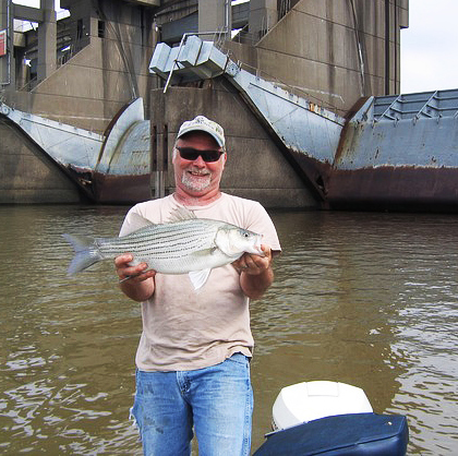 Big Moe holding a stripe bass he caught on the Ohio River near the Markland Dam. (photo submitted)