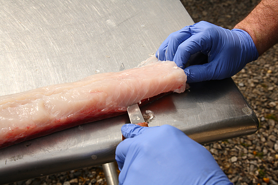 Using rubber gloves, a sharp filet knife and cutting away from your body helps ensure safety when preparing fresh caught fish for the table. Placing your catch on ice, and not dangling on a stringer, better preserves the taste of the meat. Fresh fish is low in fat and high in protein.