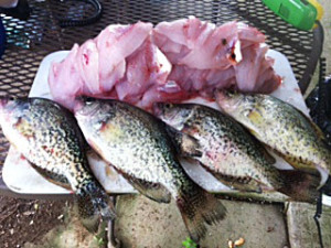 Greg Dowdy method has proven to produce good crappie on Cave Run Lake photo by Greg Dowdy