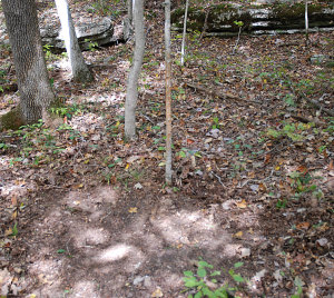 Finding scrapes and rubs can help you in the placement of stands during the rut. Here we have an old scrape that has already seen fresh rubs on a sapling this year. This is a prime location for a tree stand. (Photo by Chris Erwin)
