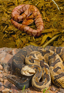 Spring is Snake Season