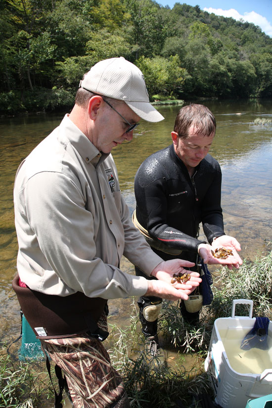 Gregory K. Johnson, Commissioner of the Kentucky Department of Fish and Wildlife Resources, (left) and Monte McGregor, mussel biologist for Kentucky Fish and Wildlife, hold specimens of three rare mussel species prior to stocking in the Big South Fork of Cumberland River this past August. The mussel stockings are one of many accomplishments of Kentucky Fish and Wildlife toward its strategic plan that may be viewed in a document at the department's website at fw.ky.gov.