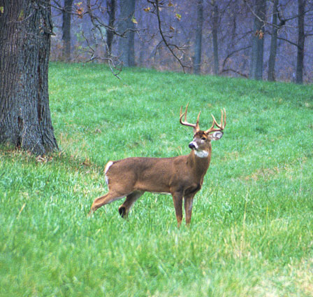 Answers to common questions about Kentucky's modern gun deer season
