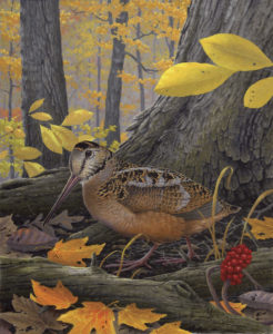 The season dates for American woodcock, as depicted in this painting by Kentucky Fish and Wildlife artist Rick Hill, changed for the 2016 season as did the September Canada goose season dates.