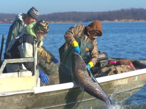 Carp Blitz Set for Kentucky, Barkley Lakes