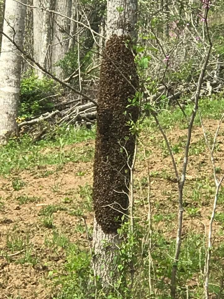 My First Swarm of Honey Bees in the Box