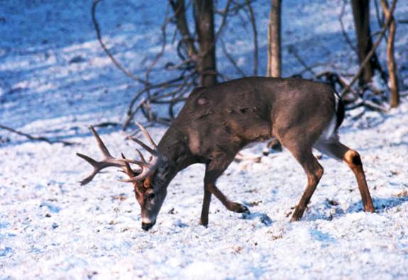 Hunters post fifth-highest deer harvest on record