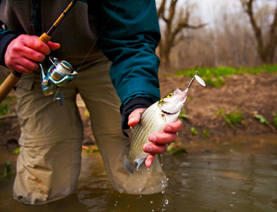 Deciphering the white bass runs this spring