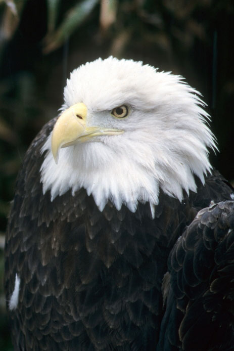 Give nesting eagles the space they need