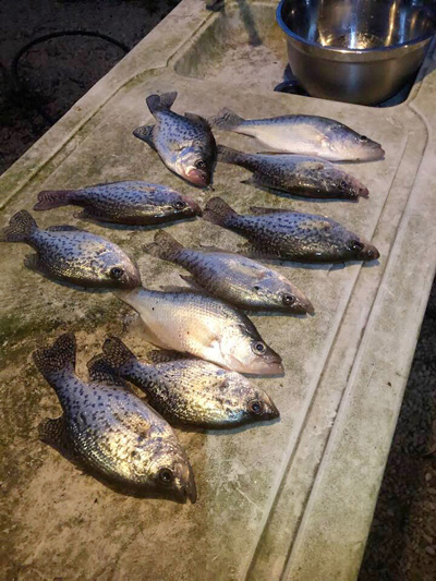 Crappie Fishing is heating up what you should look for